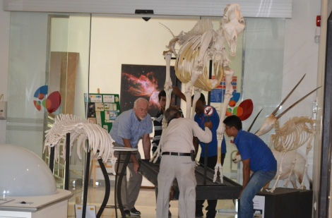 Staff at the Bahrain Science Centre moving the skeletons